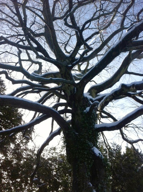 winter at darley house