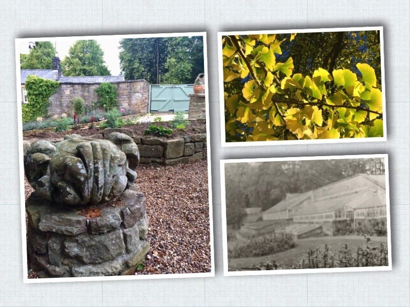 Three photos showing a column top, the gingko tree and the old glasshouses